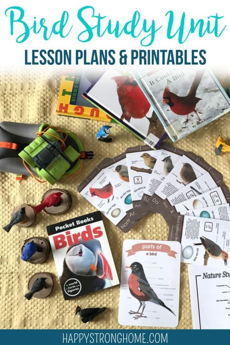 Bird Study Unit ~ Lesson Plans & Printables for Homeschool Study backyard birds with these lesson plans & printables for a homeschool bird study unit! Great Backyard Bird Count, Backyard Birds, Bird Identification, Bird Book, Bird Theme, Nature Study, Activities For Kids, Geography Activities, Enrichment Activities