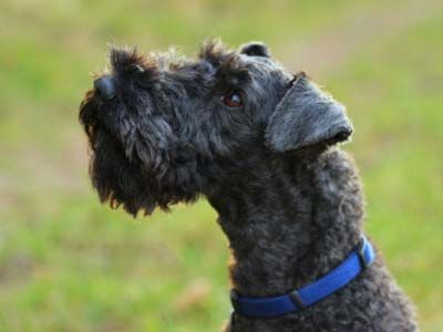 All Dog Breeds All Dog Types All Dog List Names Pictures
