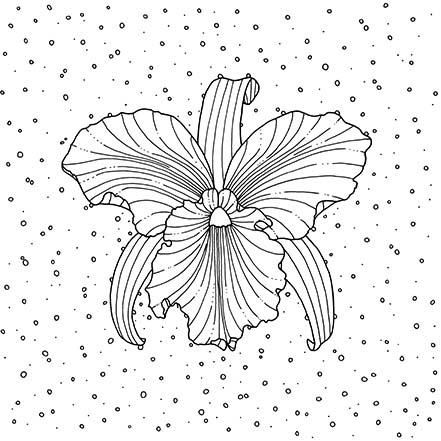 Brazilian Orchid Coloring Page Printable Coloring Pages Unique
