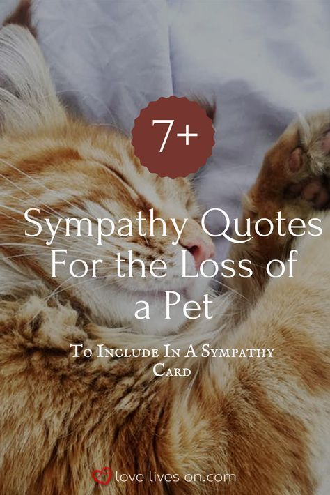 Best Gift Ideas For An Upcoming Occasion With Images Pet Sympathy Quotes Pet Sympathy Cards Pet Sympathy Gifts