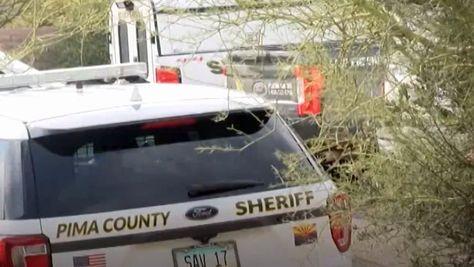 Wildhüter erschießen drei Pumas in Arizona
