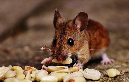 52 Mouse Pictures Geschichten Fur Kinder Kindergeschichten Und