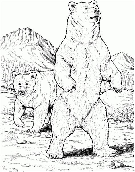 Grizzly Bear Free Drawing Patterns To Trace Bear Sketch Bear Coloring Pages Bear Drawing