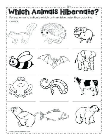 Which Animals Hibernate Hibernation Preschool Crafts Animals That Hibernate Which Animals Hibernate Hibernation worksheets for kindergarten