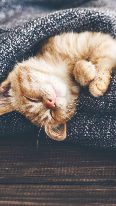 Chat sommeil - VOYAGE ONIRIQUE