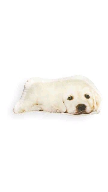12 95 Dog Cushions With Images Dog Cushions Dogs Animals