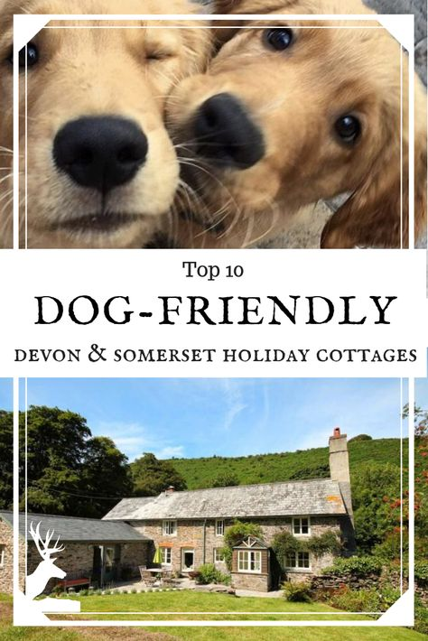 Here Are Our Top 10 Dog Friendly Holiday Cottages Across Somerset