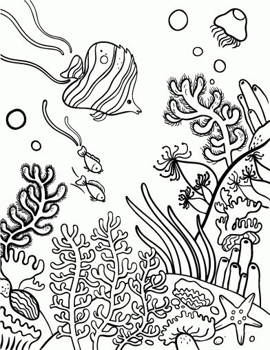 Coral Reef Coloring Page Coral Reef Drawing Coral Drawing Coloring Pages
