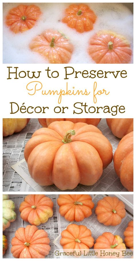 Learn how to preserve your pumpkins and make them last longer for décor or storage on gracefullittlehoneybee.com
