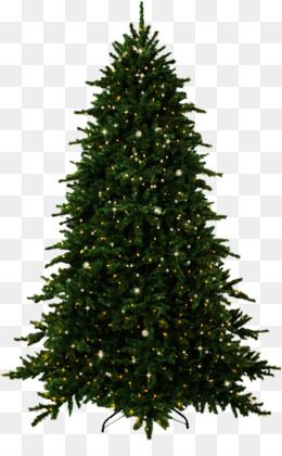 Christmas Tree Branch Png Download 1200 802 Free Transparent Fir Png Download Cleanpng Kisspng Christmas Tree Branches Christmas Tree Tree