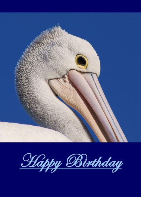 Happy Birthday Australian Pelican Blank Card Ad Affiliate Australian Birthday Happy Card Happy Birthday Cards Happy Birthday Greeting Card Artist