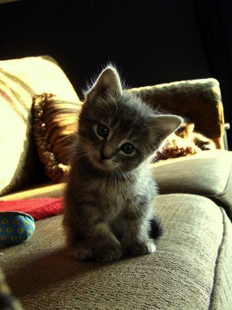 Cute Cats Rare Although 72 Cutest Animals List Netflix Upon 72