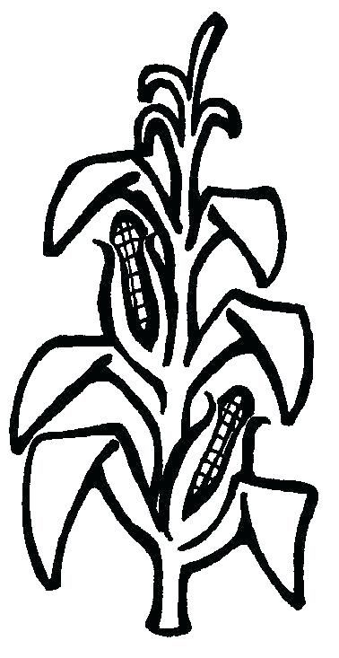Coloring Pages Of Corn Corn Stalk Free Clip Art Clip Art Art