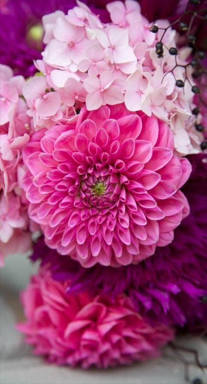 Pin By Fathima Shabu On Wallpaper Flower Phone Wallpaper Flower Wallpaper Floral Wallpaper