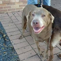 Austin Animal Center In Austin Texas With Images Puppy Adoption Dog Adoption Pet Adoption