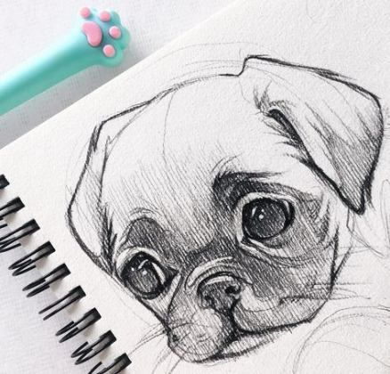 54 Trendy Dogs Drawing Pencil Animals Animal Sketches Drawing Sketches Cool Drawings