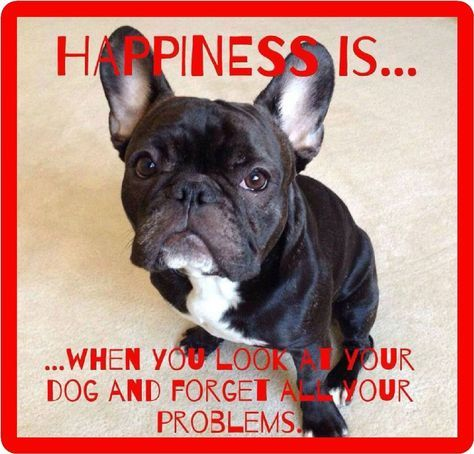 5 5 French Bull Dog Happiness Refrigerator Tool Box Magnet