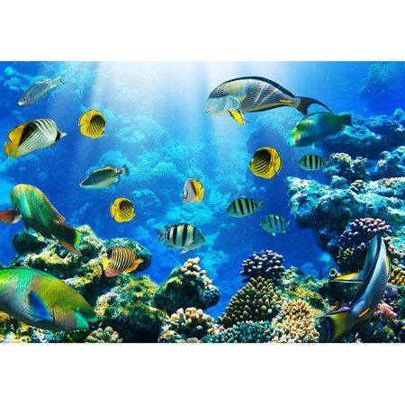 Wall26 Photo Of A Tropical Fish On A Coral Reef Removable Wall Mural Self Adhesive Large Wallpaper 100x144 Inches Walmart Com In 2021 Removable Wall Murals Ocean Wallpaper Wall Murals