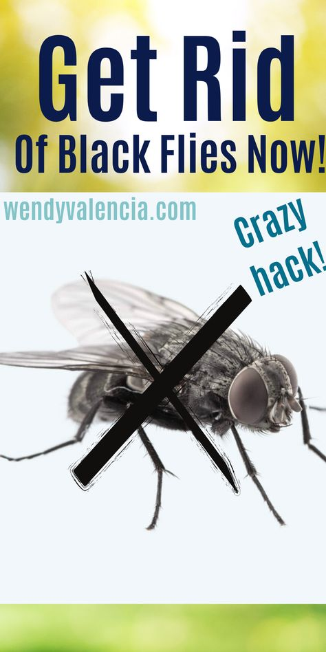 How We Stopped Our Black Fly Problem Forever Wendy Valencia In 2020 Black Fly Make More Money Get Rid Of Flies