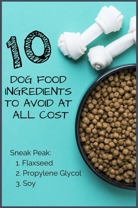 10 Dog Food Ingredients To Avoid At All Cost Dog Food Recipes