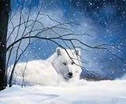 springbok white wolf puzzle - *******