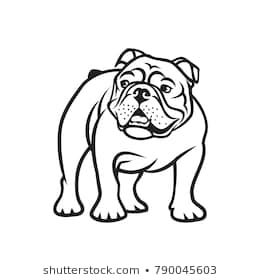 English Bulldog Isolated Outlined Vector Illustration English
