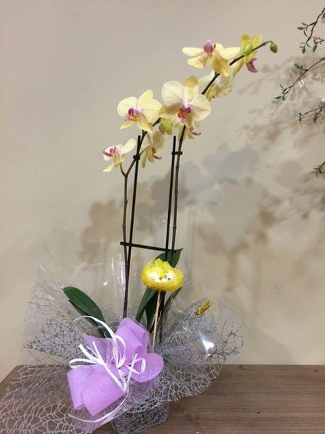 Excelente Planta De Orquidea Con Una Presentacion Exquisita Por