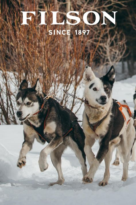 Explore Filson Pet Supplies Shop Durable Collars Bowls Beds Leashes And More For The Honorary Member Of Your Family Shop Unfail In 2020 Pets Pet Supplies Animals