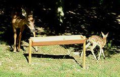 Deer Errrr Bear Feeders For Your Home Deer Feeders Deer Deer Feed