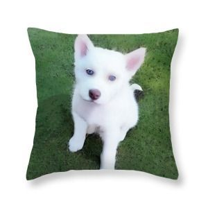 Siberian Husky Throw Pillow Siberian Husky Puppy A030619 Throw