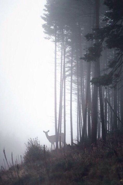 A deer in a foggy forest. #Deer #Animals #Nature #... - #animals #Deer #Foggy - #animals #foggy #forest #nature - #new