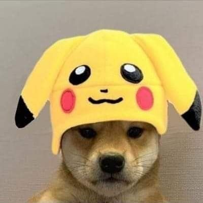 Pin By Clapped On Dog With Hat In 2020 Anime Memes Cute Animals Pikachu Hat