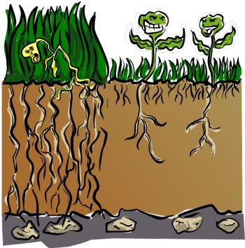 Organic Lawn Care For The Cheap & Lazy - Some very interesting information!