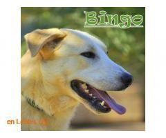 Perros Machos En Adopcion Espana Sevilla Bingo Perros