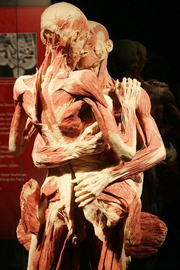 Art Plastination Humans 300 Ideas In 2020 Human Bodies Exhibit Human Body
