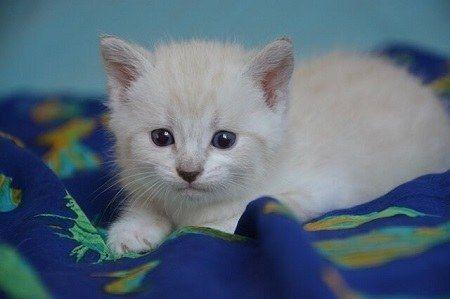 Kittens Eyes Open At 3 Days Old Here S What To Do Kitten Eyes Kitten Care Kittens