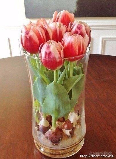 тюльпаны в парниках выращивание