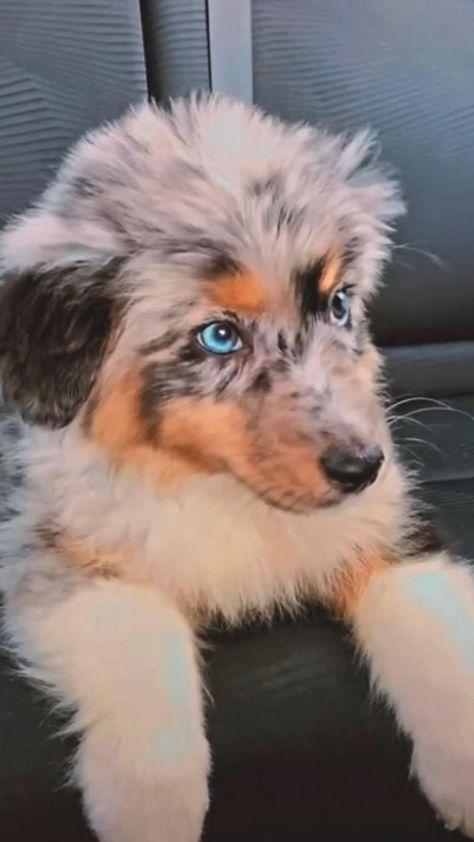 Cute dogs🥰🥰