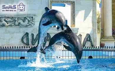 پارک دلفین کیش Dolphins Whale Animals