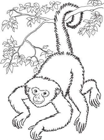 Affe Ausmalbilder Malvorlagen Kinder Painting Coloring Weihnachten Tiere Affenzeichnung Malvorlagen Fur Kinder Ausmalbilder