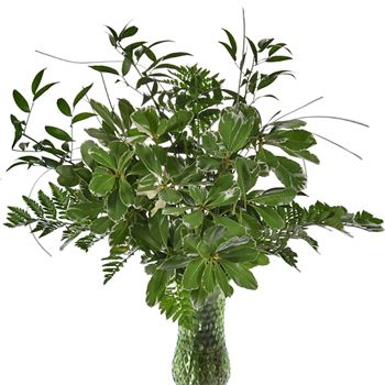 This Whimsical and Chic Centerpiece is full of lush greens of varying sizes and texture. With four different types of greenery, including Variegated Pittosporum, Leather Leaf, Italian Ruscus, and Bear Grass, this untamed bunch has tons of depth which makes it extremely unique! Best of all, this bouquet comes ready-made, meaning that it will be both easy and elegant for your special day.