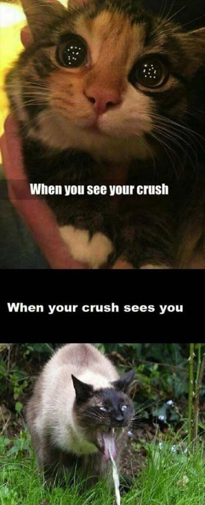 13 Times Animals Had To Deal With That Awkward Moment They Saw Their Crush Memes Funny Animal Memes Funny Cat Memes Animal Memes Clean