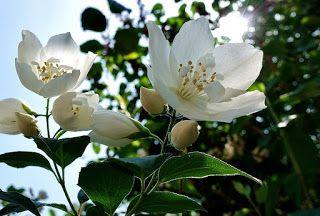 10 Flower Name In English English Grammar Here English Flower Grammar In 2020 Flowers Name In English Flower Names English Flowers