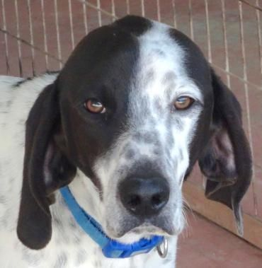 Mix Welpen Henry 5 Ist Traurig Im Tierheim Tiere Suchen Ein Zuhause Tierheim Hunde