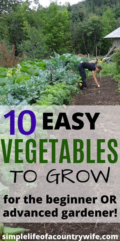 Want To Start A Garden But Not Sure Where To Start Check Out This