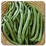 Organic Kentucky Wonder Pole Bean
