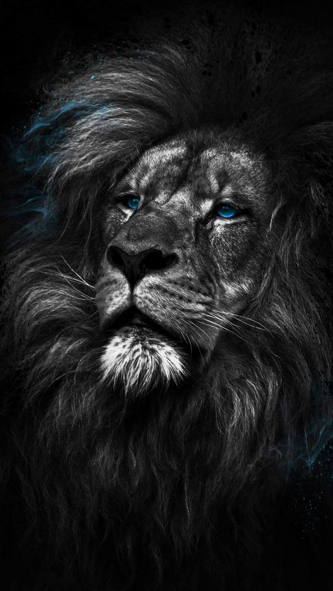 Animal Wallpapers Iphone Wallpapers Lion Wallpaper Iphone Black Wallpaper Iphone Lion Wallpaper