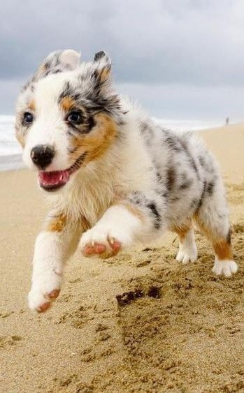With The Wind In Your Fur And The Sand Between Your Paw Pads