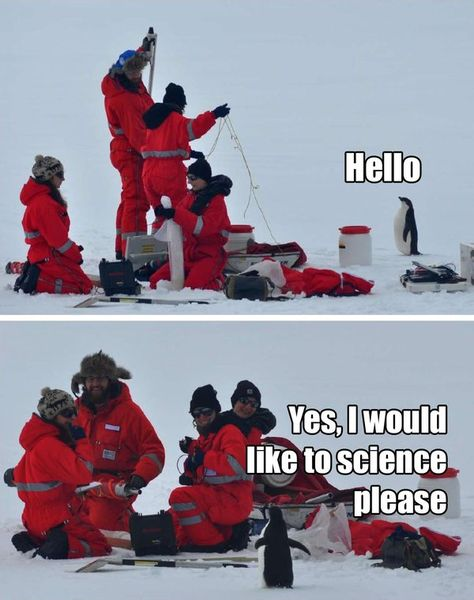Humor: puns, memes and funny pics ~ Penguins. They like to science. Humor Animal, Animal Memes, Animal Captions, Funny Animal Pictures, Funny Animals, Cute Animals, Animal Fun, Penguin Pictures, Random Pictures