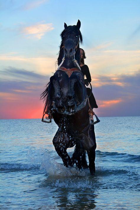 صور حصان اسود Horse Rearing Horses Animals